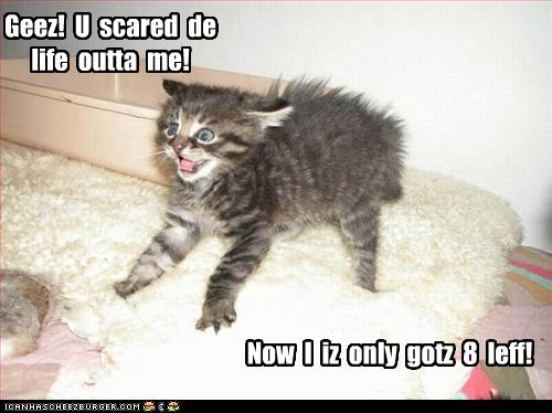 funny-pictures-kitten-is-scared.jpg